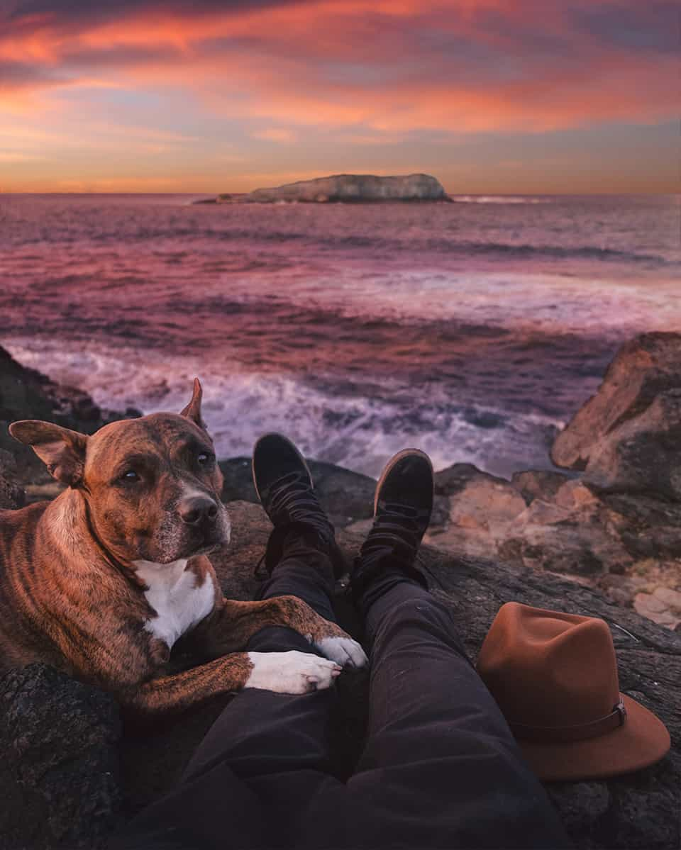 Happy Dog at Ocean