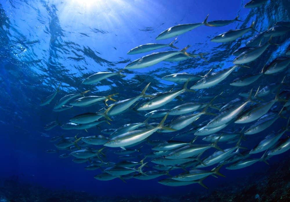 The Mendocino Ocean & Seafood Fair