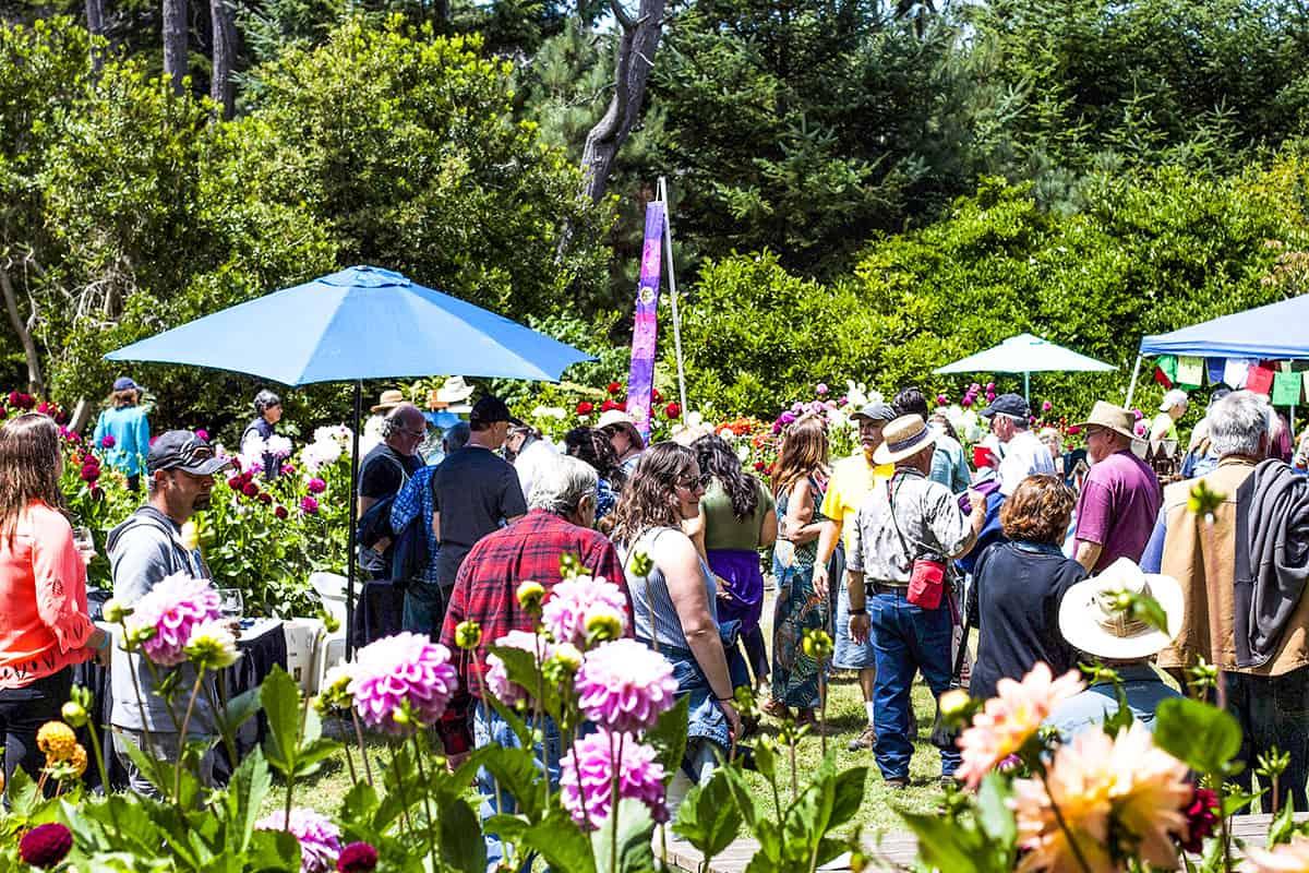 Art In The Gardens 2018 dahlia garden